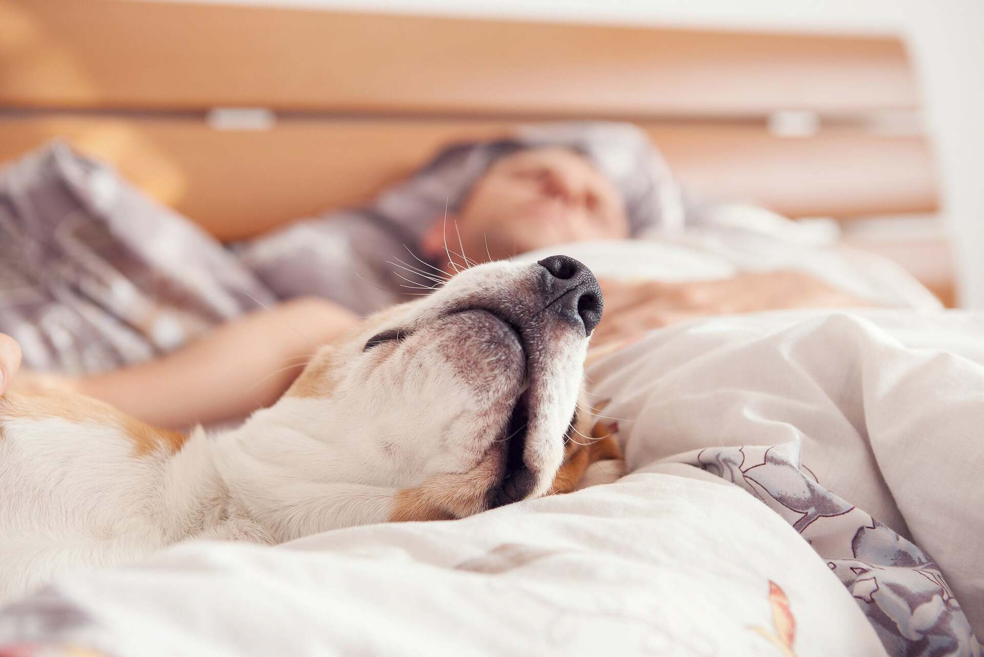 Why You Shouldn't Sleep With Your Pet